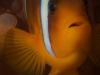 el_gouna_2010-53