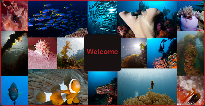Adri Leijendekkers Underwater Photography